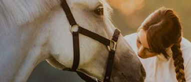 American National Careers Equine Owners Insurance
