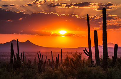 Desert sunset with mountains and cacti