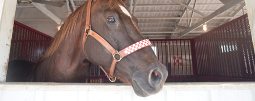 Purina Horse