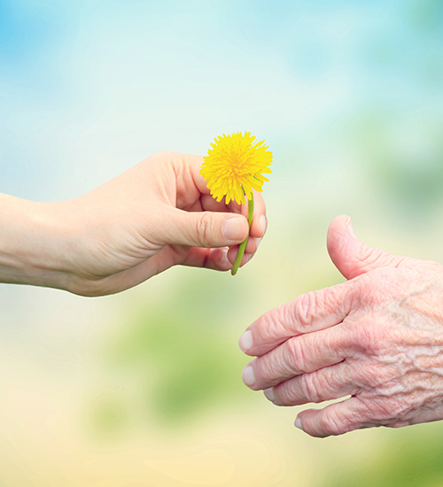 image of a female handing a flower to a senior