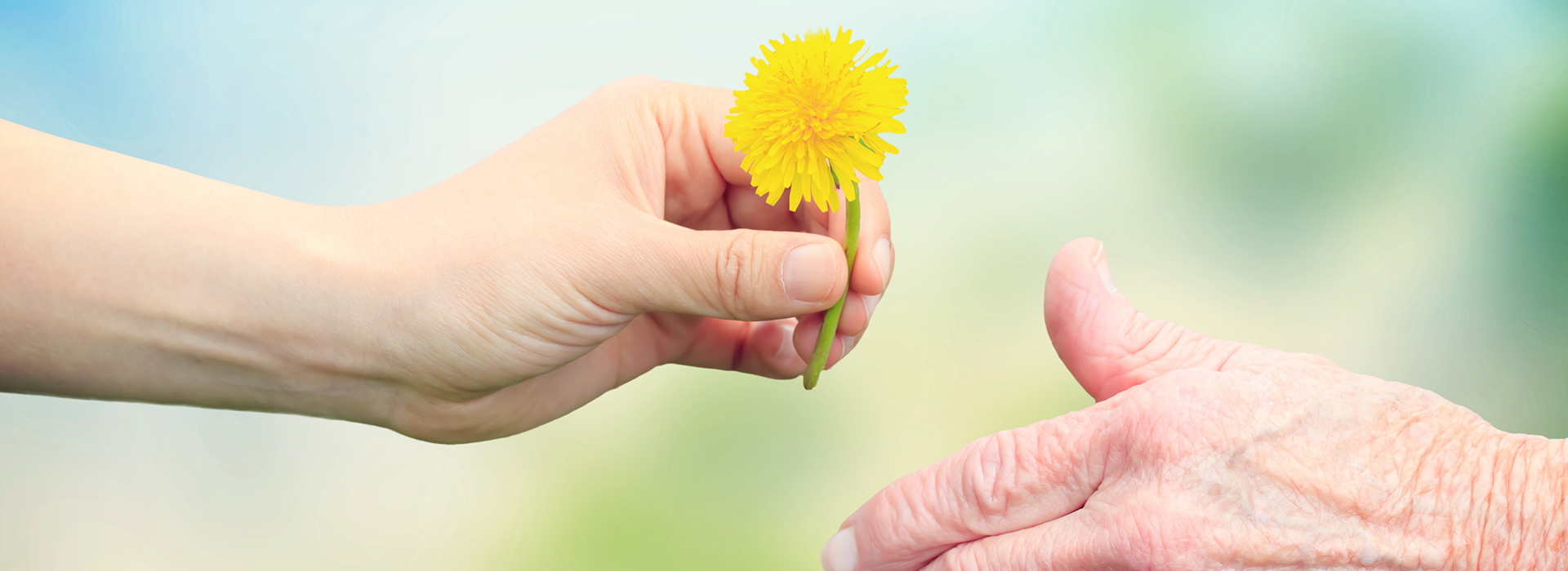 image of a young person giving a yellow flower to a senior
