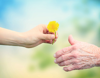 image of young person passing a yellow flower to a senior
